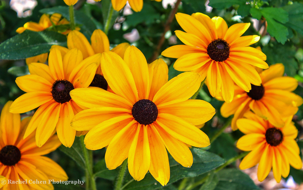 &quot;Hidden&quot;<br />