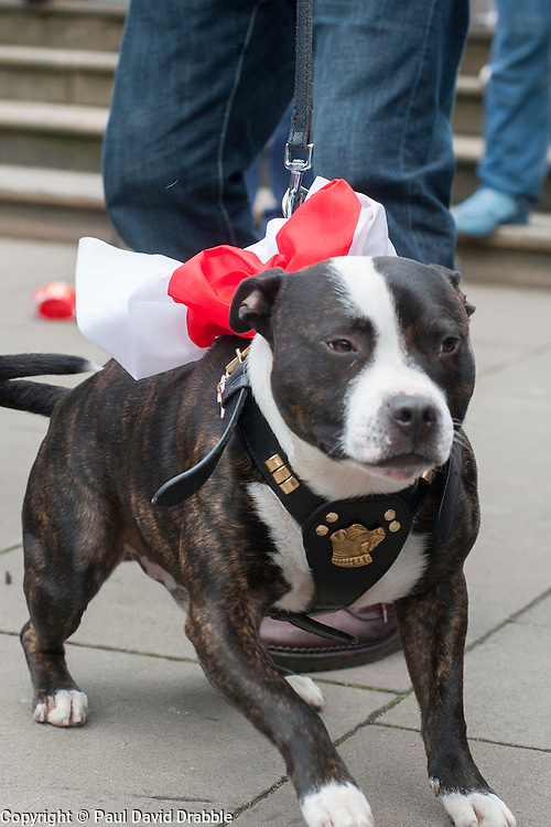 Decked out in Red and White Snoopy the dog with EDL members and supporters in All Saints Square near Rotherham Minster during Saturdays  EDL rally in South Yorkshire  in Rotherham Town Centre <br /> <br /> May 10 2014<br /> Image &copy; Paul David Drabble <br /> www.pauldaviddrabble.co.uk