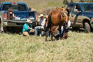 Cowboys, relax after branding, Lazy SR Ranch, Wilsall, Montana, Jim Logan, Lee Pinkerton