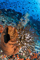 Feather Star, Sponge, and Triggerfishes<br /> <br /> Shot in Indonesia