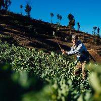 HSSU 20150409 TNLA kapinallisryhmä Shanin osavaltiossa, Myanmar. TNLA sotilaat katkoo kasveja kepeillä. Kuva: Benjamin Suomela