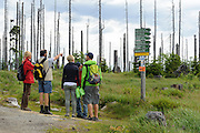 Wanderer, toter Wald, Dreisesselberg, Bayerischer Wald, Bayern, Deutschland   walkers, Mt. Dreisessel, Bavarian Forest, Bavaria, Germany