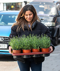 © Licensed to London News Pictures. 12/05/2020. London, UK. A women carries flowers and plants in East Sheen South West London as the Government is set to relax the law on lockdown tomorrow (Wednesday 13 May 2020) to let people go to Garden Centres and to spend more time outside to enjoy the fresh air, picnics, sunbathing and to be able meet other people while following social distancing guidelines. Photo credit: Alex Lentati/LNP