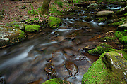 Spring-time at Mill Creek at Cades Cove, Tennessee.