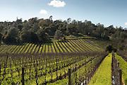 Somerston Wine, Priest Ranch, Napa, California