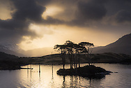 A small cluster of trees on an island in Loch Assynt, Scotland, just after sunrise.