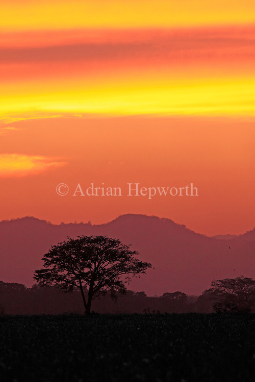 Sunset, Guanacaste, Costa Rica. <br /> <br /> For pricing click on ADD TO CART (above). We accept payments via PayPal.