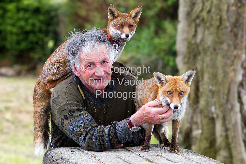 17/5/2010.Patsy Gibbons from Thomastown Kilkenny pictured with his foxes Grainne( darker) and Millie..Picture Dylan Vaughan.19/5/2010.Patsy Gibbons from Thomastown Kilkenny pictured with his foxes Grainne( darker) and Millie..Picture Dylan Vaughan.