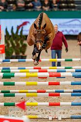 Carl Gustav<br /> Leipzig - Partner Pferd 2020<br /> Pferde in Sachsen und Thüringen präsentiert:<br /> PARTNER PFERD DSP Freispring-Cup des Deutschen Sportpferdes<br /> 17. Januar 2020<br /> © www.sportfotos-lafrentz.de/Stefan Lafrentz