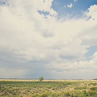 wild prairie of eastern montana, lone cottonwood tree on montana prairie conservation photography - montana wild prairie