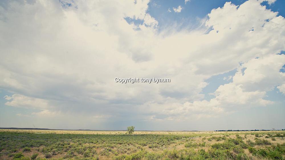 wild prairie of eastern montana, lone cottonwood tree on montana prairie conservation photography - montana wild prairie