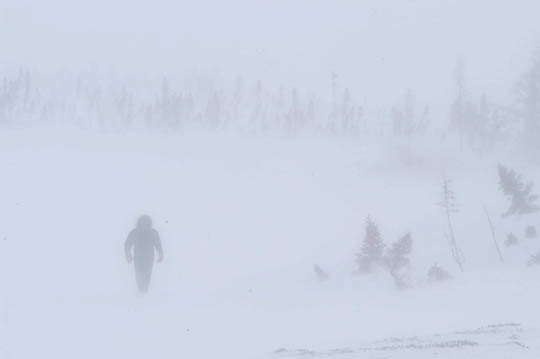 Trackers searching for polar bear tracks within denning area of  Wapusk National Park, Manitoba, Canada. Strong winds and -35F degree temps make tracking difficult.