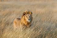 Big mammals / Grandes mamíferos