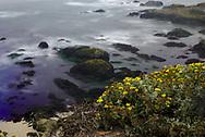 Deep blue coast in Bodega bay