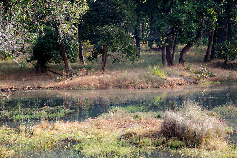 Watering Hole in Bandhavgarh National Park, India