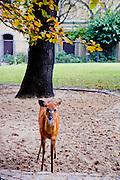 The Berlin Zoological Garden, Berlin, Germany