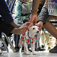 Students pet Sweetie. She's not only the center of attention in the classroom but also provides a stress-reliever for students and teachers.