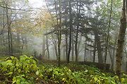 October 11, 2017: The fog lifts from the woods at Newfound Gap.