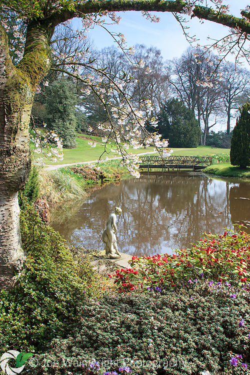 A blossoming cherry frames the lake in the Temple Garden at Cholmondeley Castle, Cheshire.