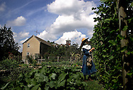 BETHLEHEM, CT- 11 OCTOBER 2005- Mother Margaret Georgina Patton picks beans in the raised bed garden at the Abbey of Regina Laudis in Bethlehem. Mother Margaret Georgina is the granddaughter of General George Patton, who liberated the abbey's founder, Mother Benedict Duss, from her abbey in France. <br /> (Photo by Robert Falcetti)