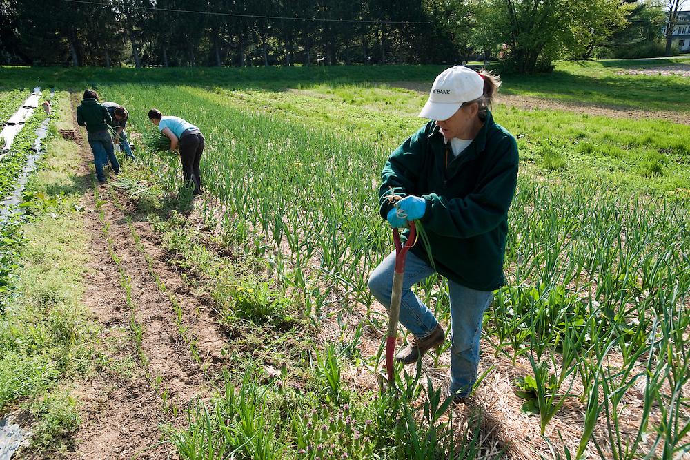 People working on organic farm