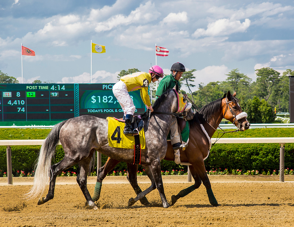 belmontpark,race,horse,thoroughbred