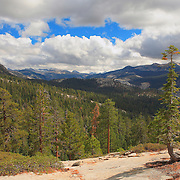 Jeffrey Pine At Clouds Rest - Yosemite