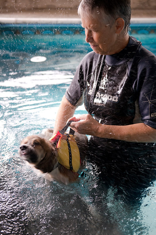 Trip (aka 'Tripod') was rescued from the U.S. by a Canadian animal charity. This puppy only had 3 functioning legs and was suffering from a neurological injury that prevented him from walking properly. But after a few swimming sessions at K9H20, he regained his ability to walk and was eventually adopted by a caring family.