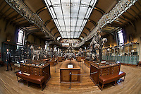 The National Museum of Natural History in Paris: the Gallery of Comparative Anatomy