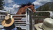 A horse jumps up in the chute while preparing for the bareback competition during the 94th Annual Falkland Stampede in Falkland, BC (2012)