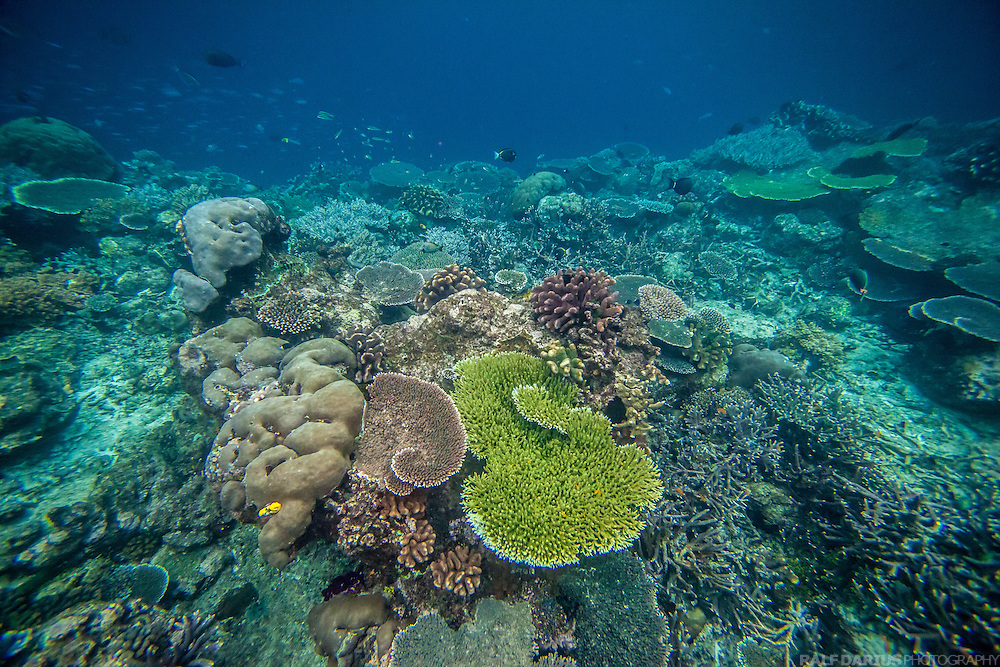 Reef secenery with different kinds of corals -Raja Ampat - West Papua, Indonesia