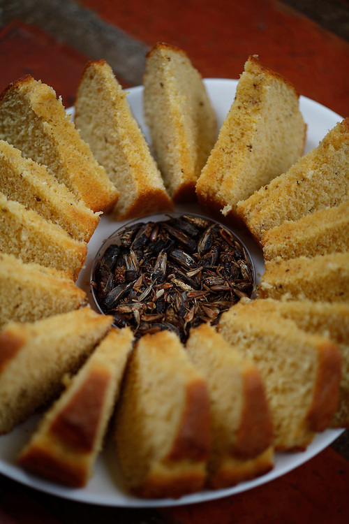 Betim_MG, Brasil.<br /> <br /> Insetos criados na Nutrinsecta para consumo humano  animal. Na foto grilo e baratas.<br /> <br /> Insects created in Nutrinsecta for human and animal consumption. In this photo crickets and cockroaches.<br /> <br /> FotoJOAO MARCOS ROSA / NITRO