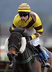 Doormouse ridden by Jack Sherwood during the SIS Handicap Hurdle (Class 4) (4YO plus)  - Photo mandatory by-line: Harry Trump/JMP - Mobile: 07966 386802 - 09/03/15 - SPORT - Equestrian - Horse Racing - Taunton Racing - Taunton Racecourse, Somerset, England.