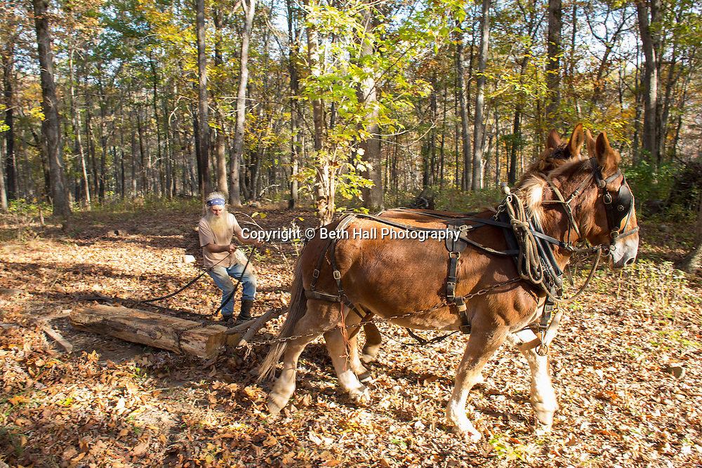 Robert Runyon uses his mules Jasper and Jenny to pull a log through his yard at their home in Sugar Tree Hollow in Winslow, Arkansas, for Out Here Magazine. Photo by Beth Hall