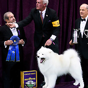 "February 16, 2016 - New York, NY : The Samoyed ""Pebbles' Run Play It Again Ham"" poses for pictures after winning the working group final of the 140th Annual Westminster Kennel Club Dog Show at Madison Square Garden in Manhattan on Tuesday evening, February 16, 2016. CREDIT: Karsten Moran for The New York Times"