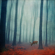 Young stag in an abstract forest - manipulated phoograph
