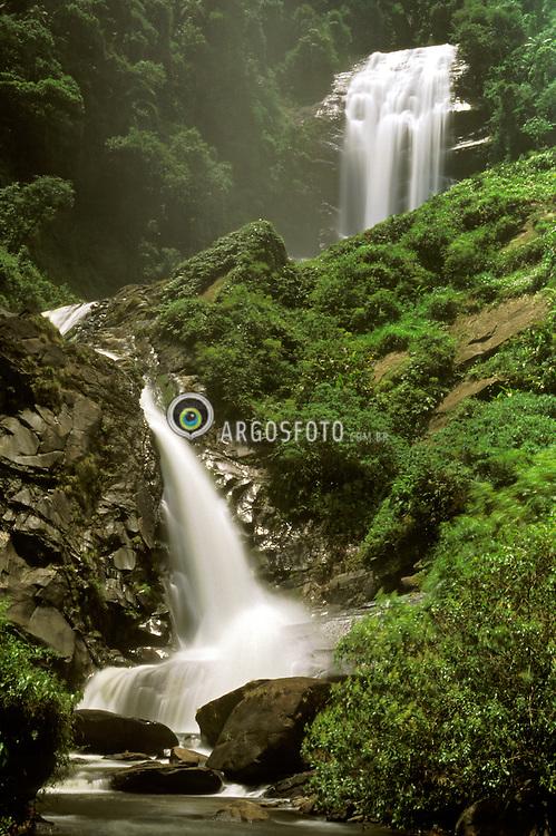 Paraty, Rio de Janeiro, Brasil.     02/2003.Trilha do Ouro, no Parque Nacional da Serra da Bocaina./ Atlantic Rainforest (Mata Atlantica) is the Atlantic Coastal Rain Forest. Bocaina National Park..Foto © Marcos Issa/Argosfoto