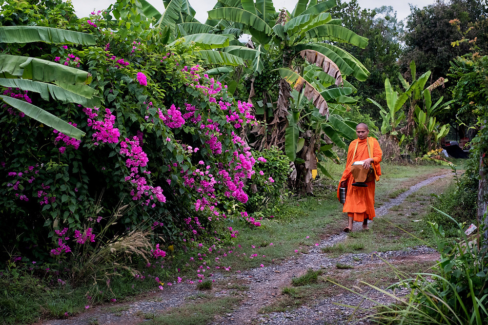 A monk walks barefoot down a small rural road while making a morning alms trek in rural Thailand.