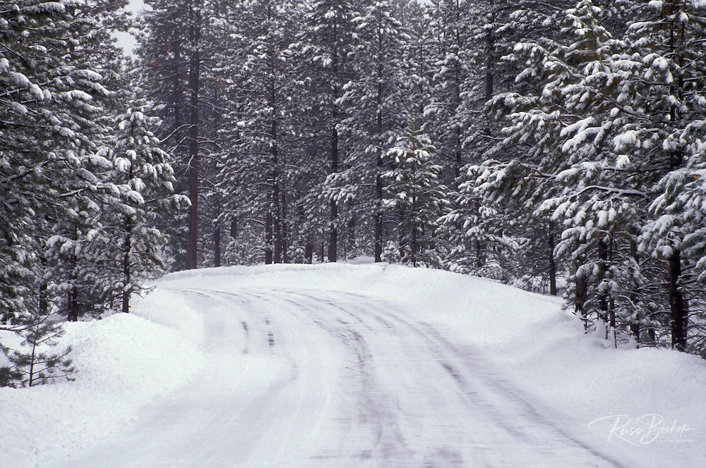 Icy road through snow covered pine forest, Bryce Canyon National Park, Utah