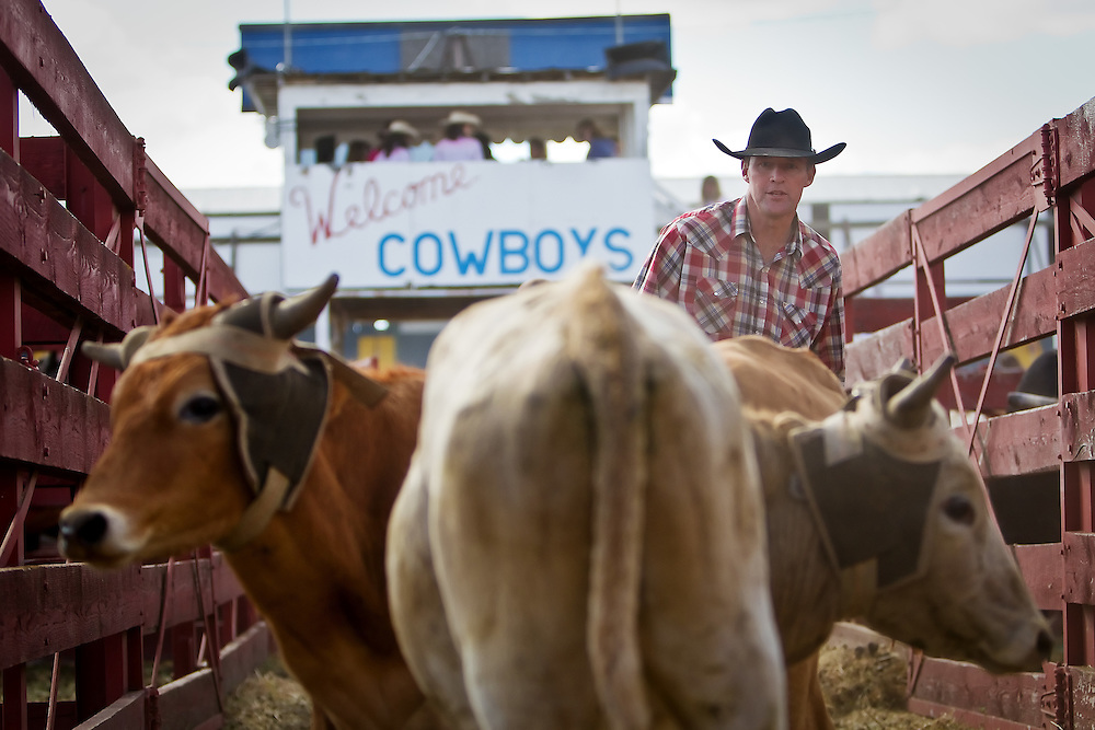Dave McMichael helps unload and separate roping steers for events Friday at the North Idaho Fair and Rodeo.