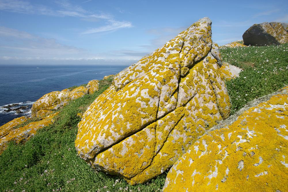 Landscape with ornithoco profile lichens Ireland Saltee Islands south east coast
