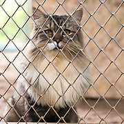 Cat waiting to be adopted at a shelter in Thailand