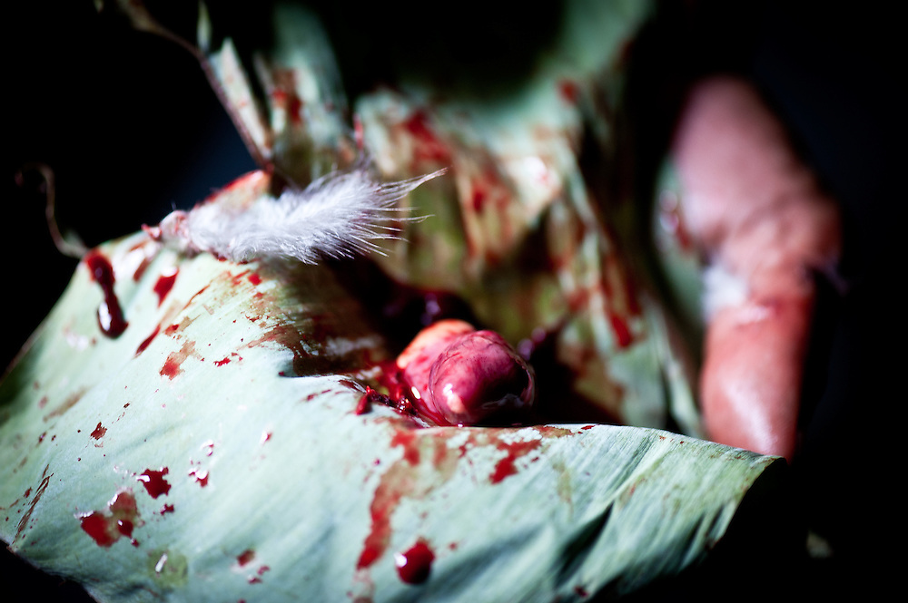 "A sacrificial chicken heart wrapped in a banana leaf before being ""fed"" to a sacred skull in an ancient Naga ritual."