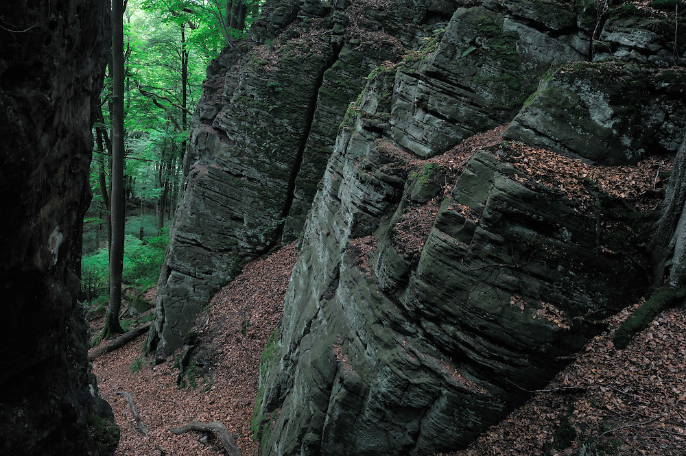Sandstone Formation in a Beech forest, Mullerthal trail, Mullerthal, Luxembourg