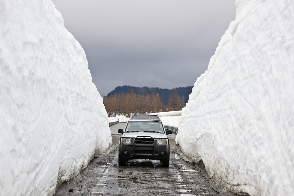 Snowdrifts cleared in spring to open up  the Copper River Highway in the Copper River Delta to traffic dwarf an SUV. PR 2008-1.