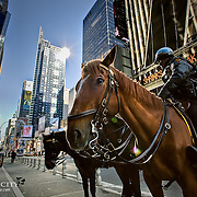 The New York City Mounted Patrol keeping a lookout