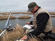 Waterfowl biologist Dr. Jim Sedinger at Black Brant nest; Branta bernicla nigricans, Tutakoke River research camp, Yukon Delta NWR, Alaska