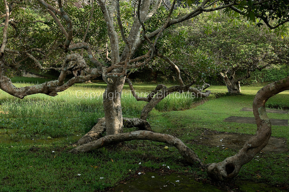 "LUNUGANGA the country home and & garden of Sri Lanka's most celebrated architect, Geoffrey Bawa...""Lunuganga, Bentota, 1948-1997....The garden at Lunuganga sits astride two low hills on a promontory which juts out into a brackish lagoon lying off the estuary of the Bentota River.  In 1948, when Bawa first bought it, there was nothing here but an undistinguished bungalow surrounded by ten hectares of rubber plantation.  Since then hills have been moved, terraces have been cut, woods have been replanted and new vistas have been opened up, but the original bungalow still survives within its cocoon of added verandas, courtyards, and loggias."" from geoffreybawa.com"
