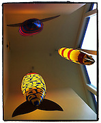 Fish decorations hang from the ceiling at restaurant. (Sam Lucero photo)