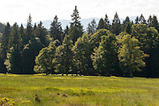 Hochschachten (ehemalige Weidefläche im Wald), Nationalpark Bayerischer Wald, Bayern, Deutschland | Hochschachten (former meadow in forest), national park Bavarian Forest, Bavaria, Germany